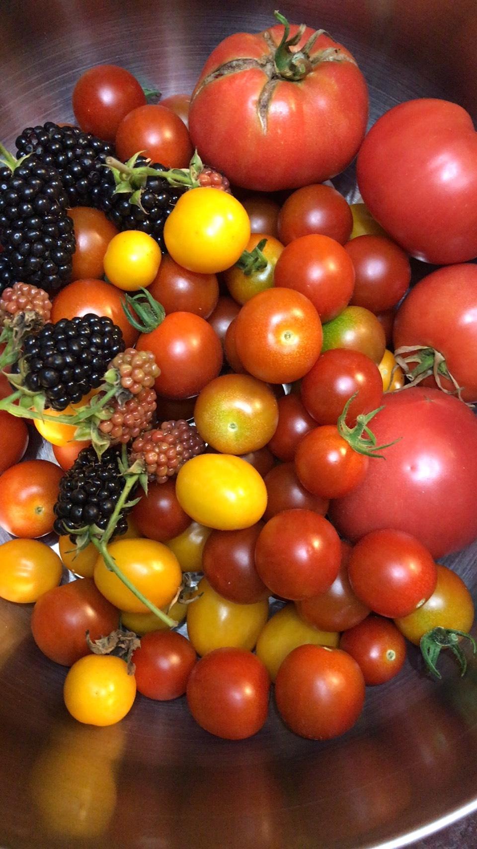 種類豊富なトマト