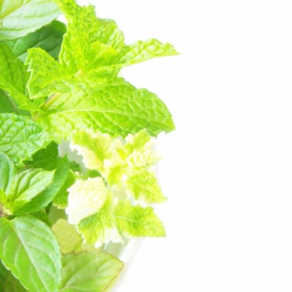 西洋の薬草代表「ミント」の薬膳活用法