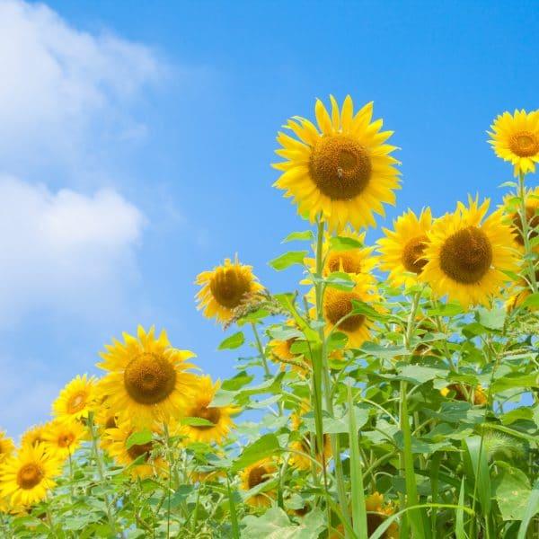 夏のあせもは自然の力で優しく癒やせる先人達の知恵