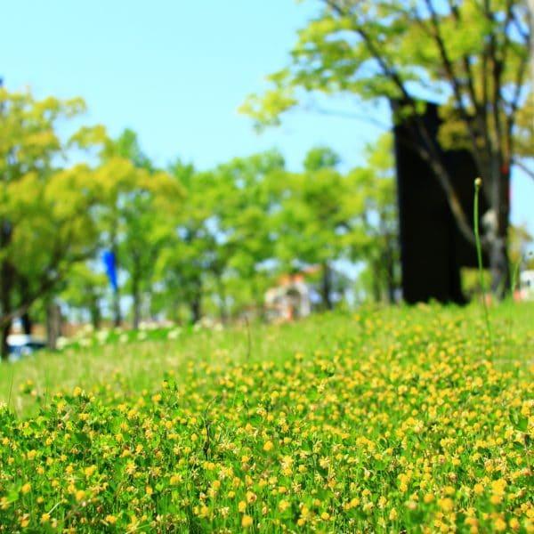 野草で楽しむ自然のお茶の知恵