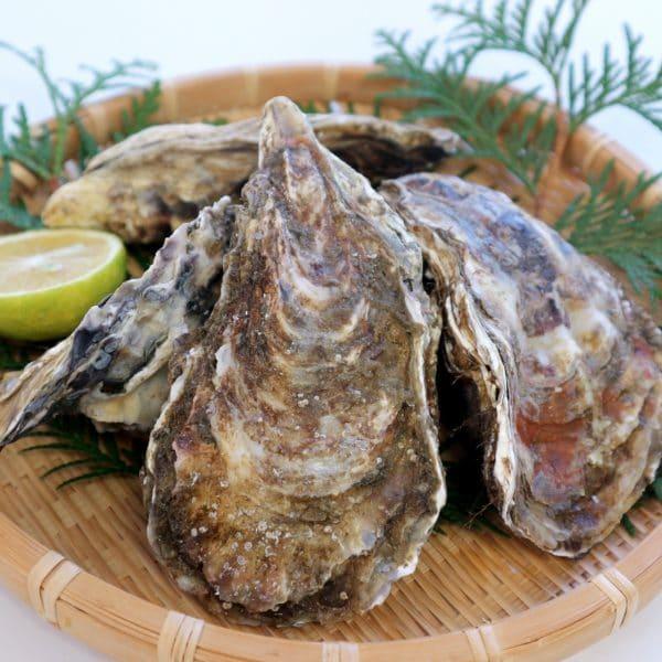 海のミルク『牡蠣』は古来から愛されていた天然の漢方薬