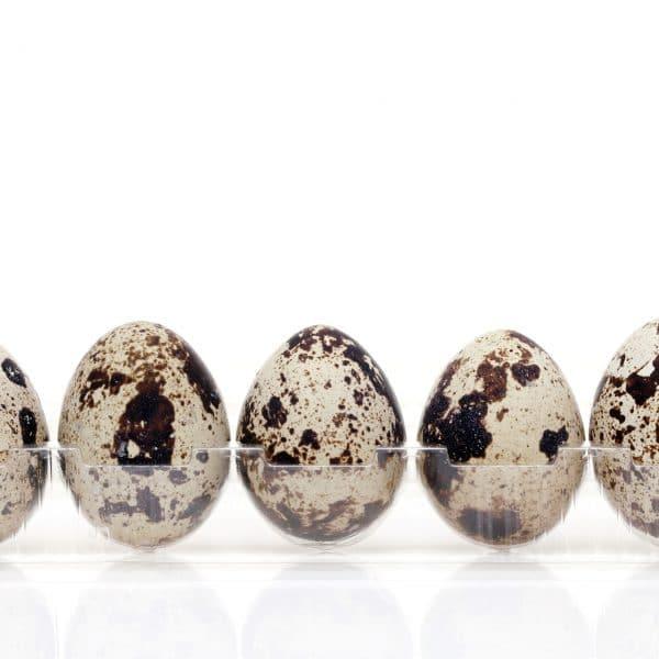 鶏卵よりもウズラの卵!? 小さな殻に包まれた栄養に迫る
